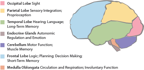 Your Brain: A User's Guide   Thoughtful Learning ...
